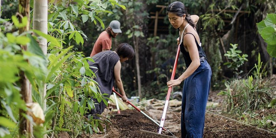Agroforestry - indigenous workers raking and conducting agroforestry n Burma