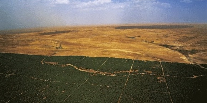 green dam of Algeria seen from aerial view with forest in foreground and desert stretching to horizon