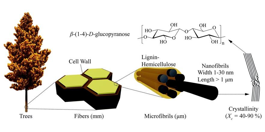 cellulose nanofibrils