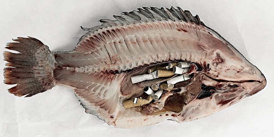 fish cut open with cigarette butts in its stomach