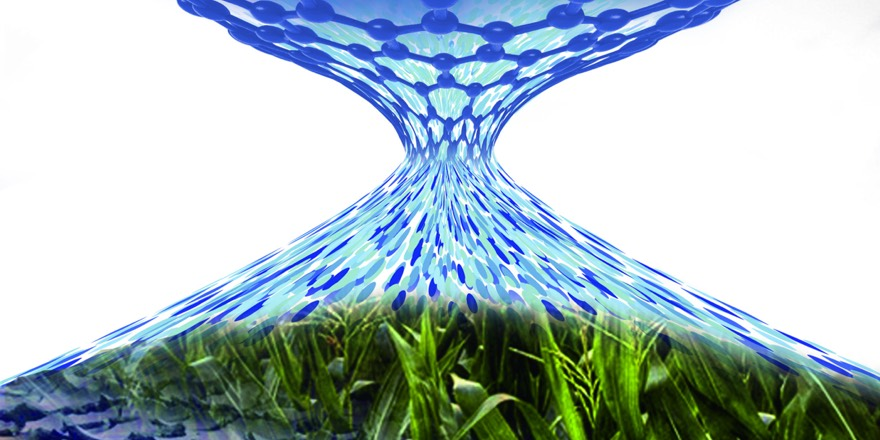 graphene and grass