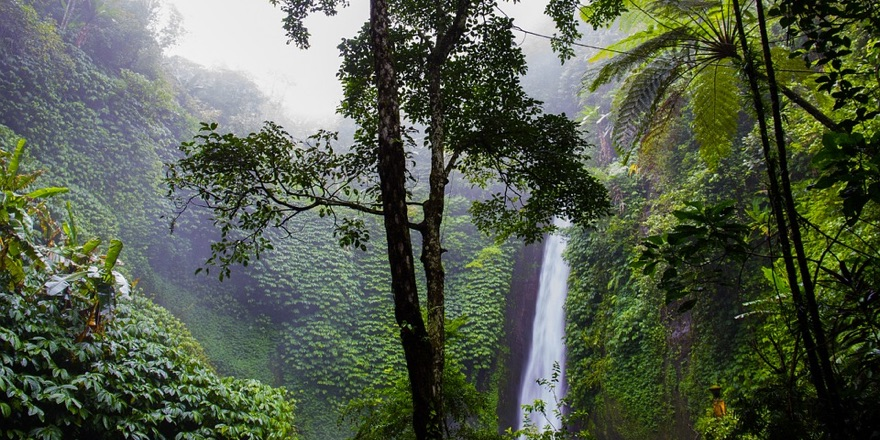tropical hotspot with waterfall