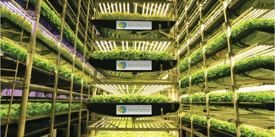 inside a vertical farm